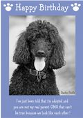 "Standard Poodle-Happy Birthday - ""I'm Adopted"" Theme"